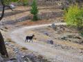 Turistka pri Agios Fanentes, Kefalonia